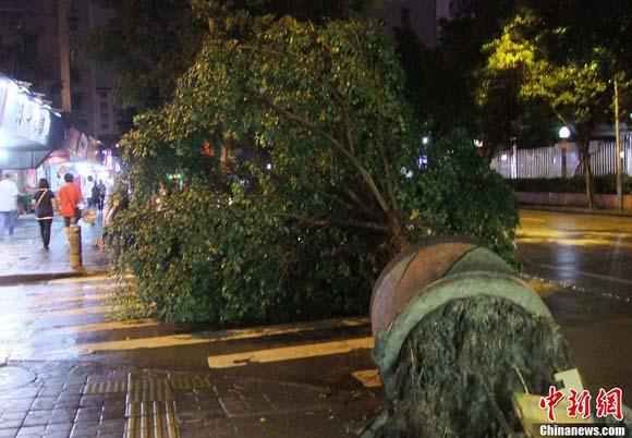 树木被狂风连根拔起