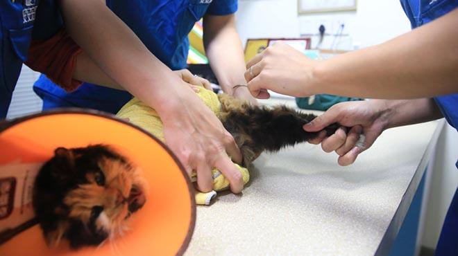 人猫情未了,杭州一宠物主人花25万克隆爱猫