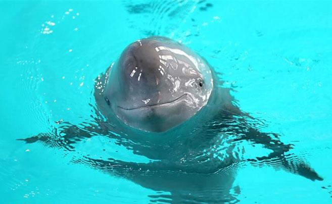 萌翻了!长江沿线的珍稀动物你知道几个?