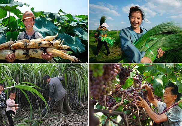 稻花香里说丰年 被这组宁波农民的微笑暖化了